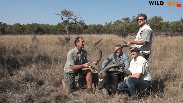 Record Greater Kudu darted and measured