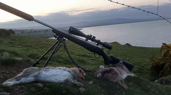 Two rabbits and a rifle with a sound moderator