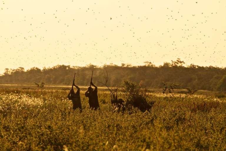 Bolivia dove shooting