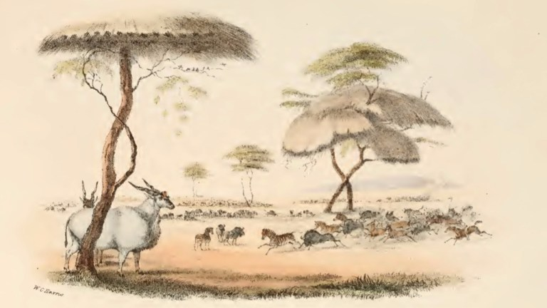 Eland, zebra, and other african plains game