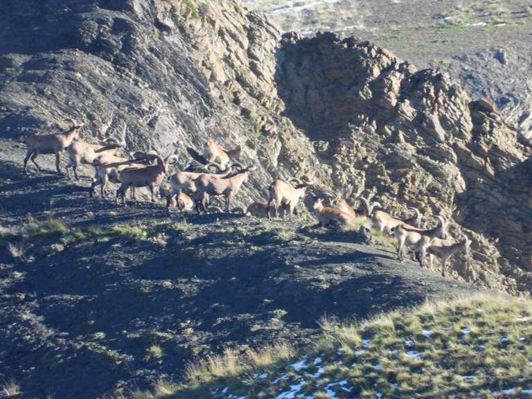 a herd of tur
