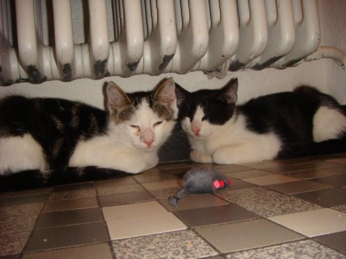 Gizmo und Felix