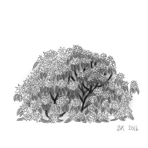 How to Draw A Rodedendron bush  - Sketch 27
