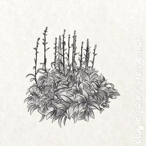 Drawing a Bush From My Garden - Sketch 225