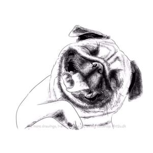 Pen and Ink Drawing of a Happy Puppy - Sketch 601