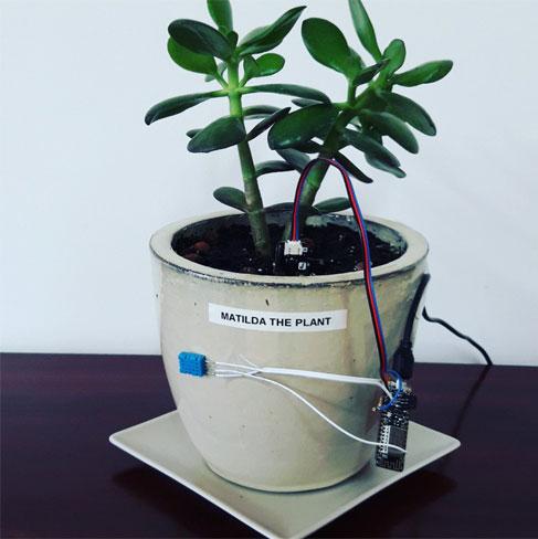 2832 matilda the plant 1 - Electrogeek