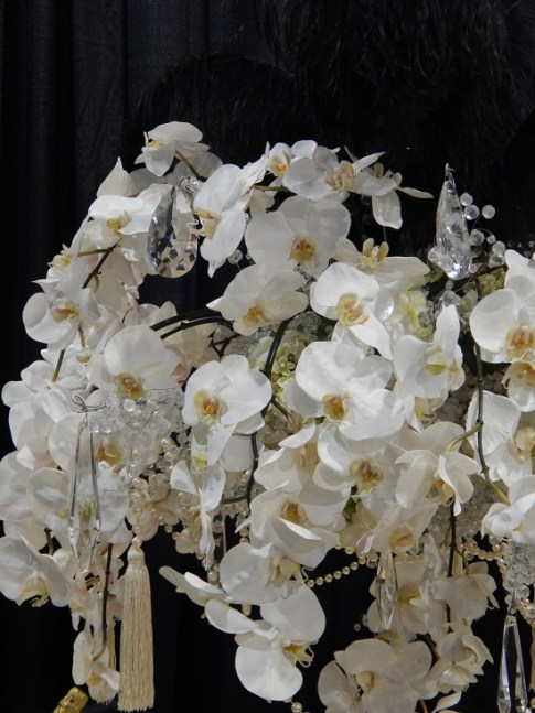 Phalanopsis Orchids