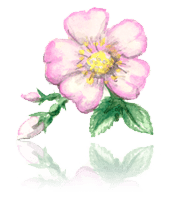 Christmas Rose custom art from Bronner's Christmas Wonderland