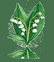Lily of the Valley custom art from Bronner's Christmas Wonderland