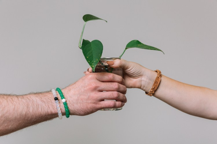 Two hands with a Lokai bracelet and Elevate braided bracelet exchanging a plant.