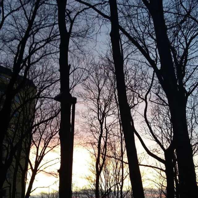sunset trees citylife Continue reading rarr