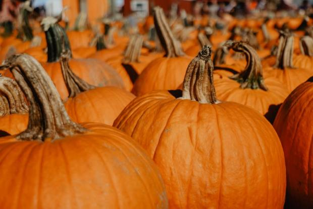 pumpkin spice recipes for autumn