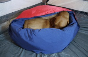 Bring some extra warm sleeping gear for your pup at night!