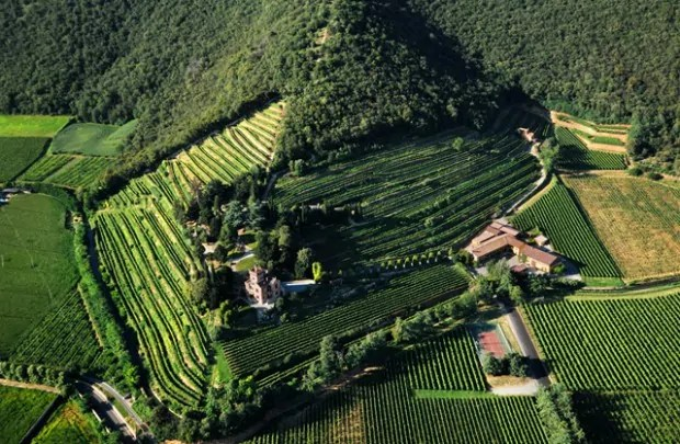 vigneti del Castello Bonomi in Franciacorta