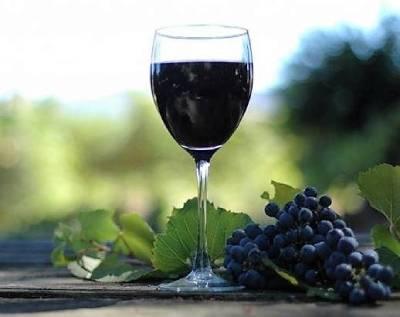 calice vino pinot nero