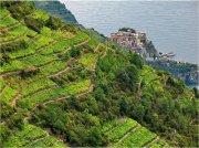 Vino bianco della Liguria, dove la terra incontra il mare