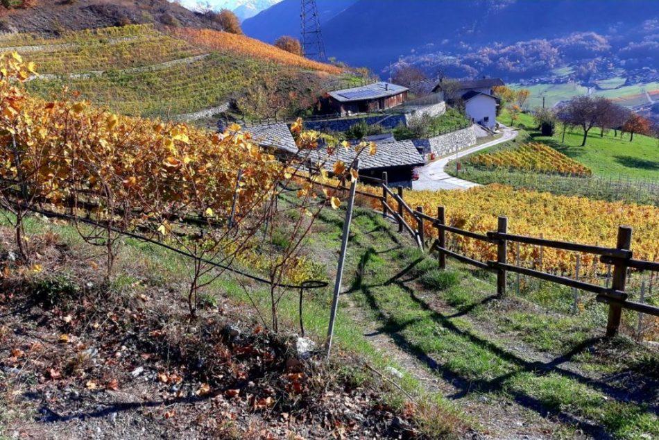 vitigni valle d'aosta terroir