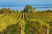 In Valtenesi alla scoperta del vino del Garda