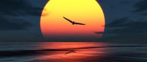 Bionic Bird Sunset