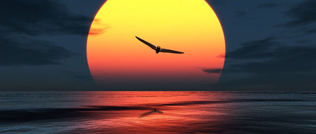 Bionic Bird Sunset