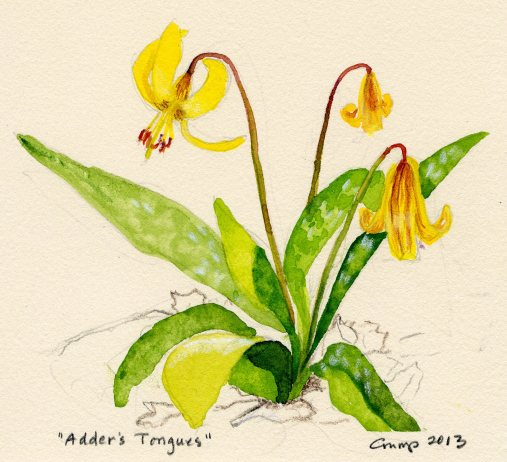 """Adder's Tongues,"" Carol Crump Bryner, gouache and colored pencil, 2013"