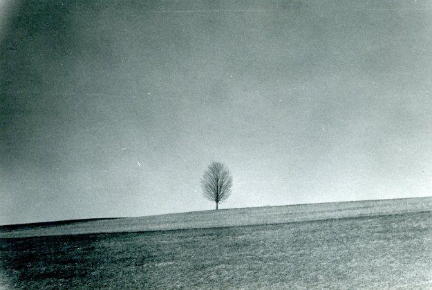 The Tree, 1972