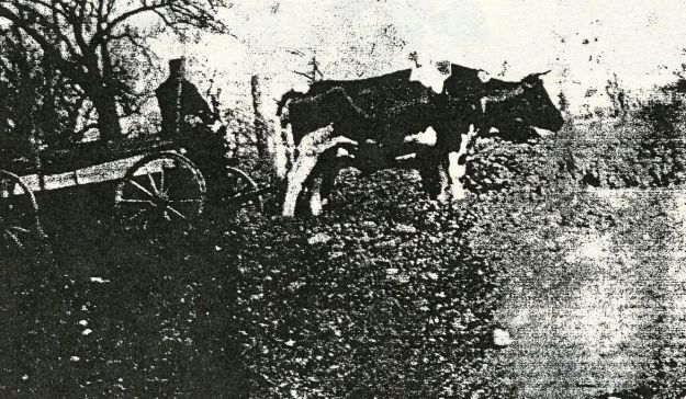 Andres Rossi driving an oxcart, around 1914