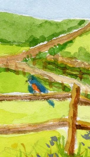 """Bluebird on a Fence,"" Carol Crump Bryner, gouache, 2015"