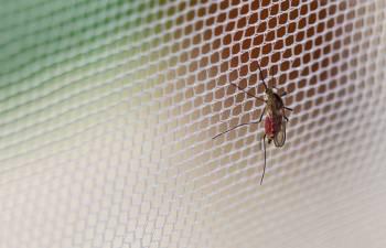 la zanzariera è uno dei rimedi per evitare le zanzare in casa