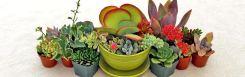 una composizione di piante grasse