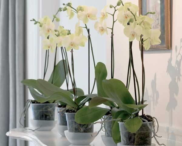Piante Da Appartamento Orchidea.Come Innaffiare Le Piante In Estate Casanoi Blog