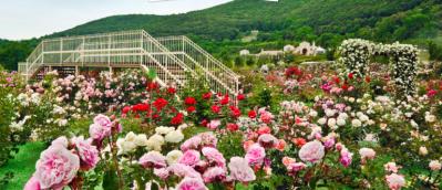 Roseti e giardini da visitare Roseto Vacunae Rosae