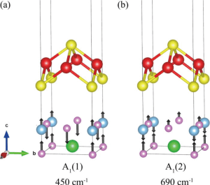 Interfacial phonons of FeSe/STO