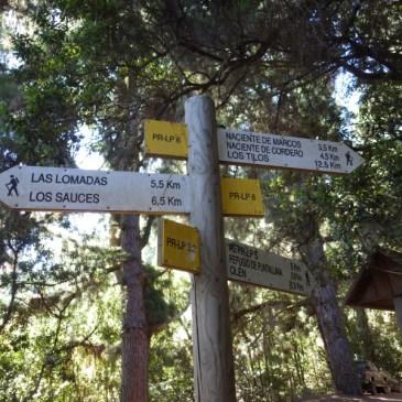 Ile de La Palma – Bosque de Tilos – Nacientes de Marcos y Corderos