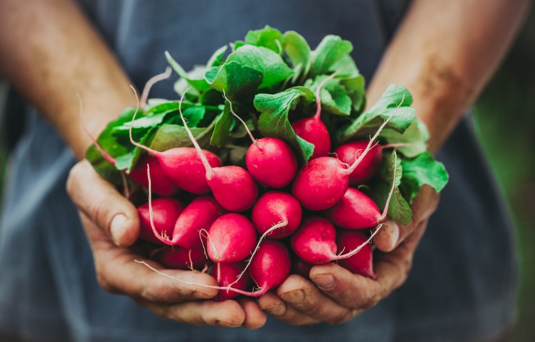 Man holding beets