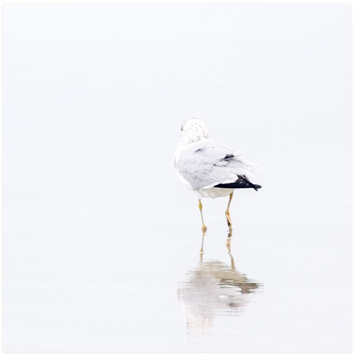 Seagull No 5 - Art for beach house by Cattie Coyle Photography