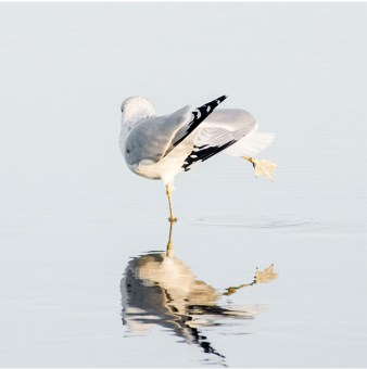 Seagull No 7 - Bird photography print by Cattie Coyle Photography