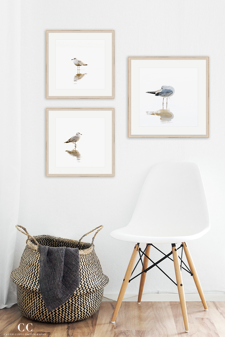 Seagull photography wall art by Cattie Coyle Photography