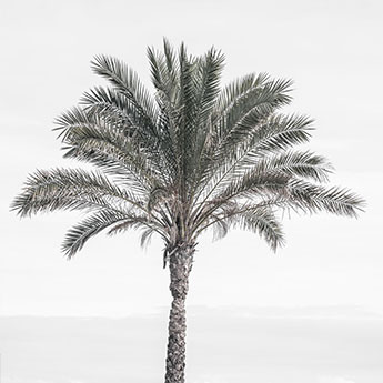 Palm Trees new fine art print series by Cattie Coyle Photography