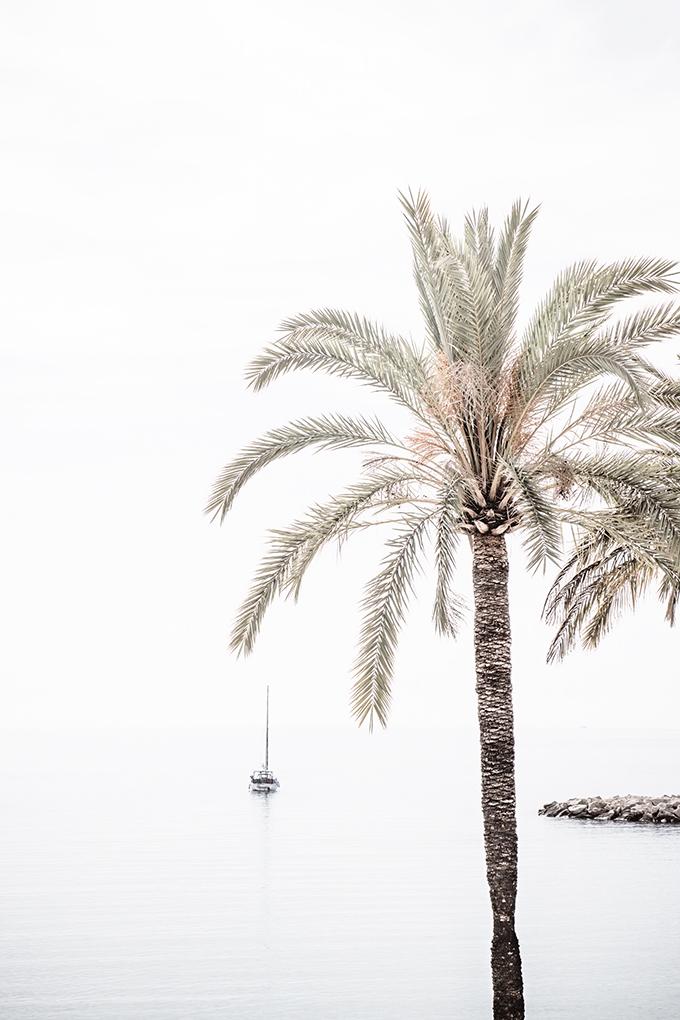 Palm Tree No 7 - Minimalist fine art print by Cattie Coyle Photography