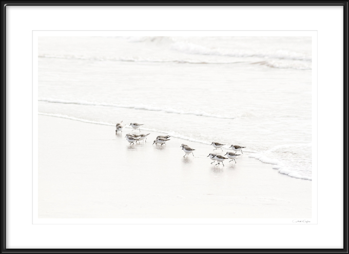 Sandpipers No 6 - Fine art print by Cattie Coyle Photograpy