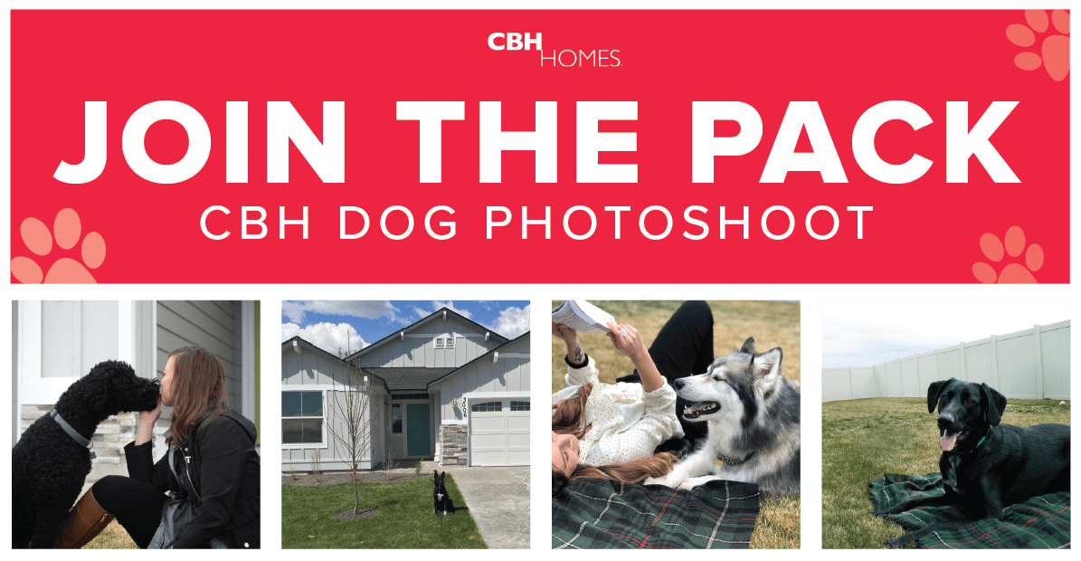 Join the pack at the CBH Dog Photoshoot  CBH Homes Blog