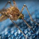 【注意】セブ島で流行のデング熱の現状と予防方法を完全ガイド!
