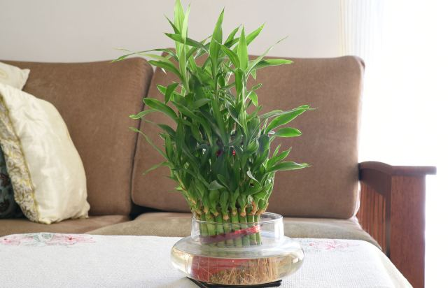 Bambú en el hogar