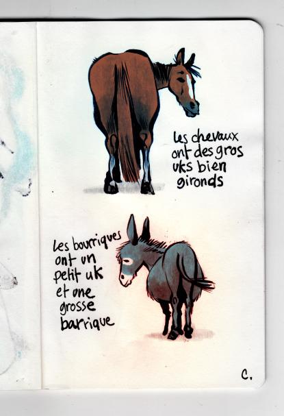Chevaux et bourriques