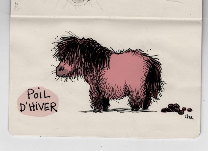 Poney poil d'hiver
