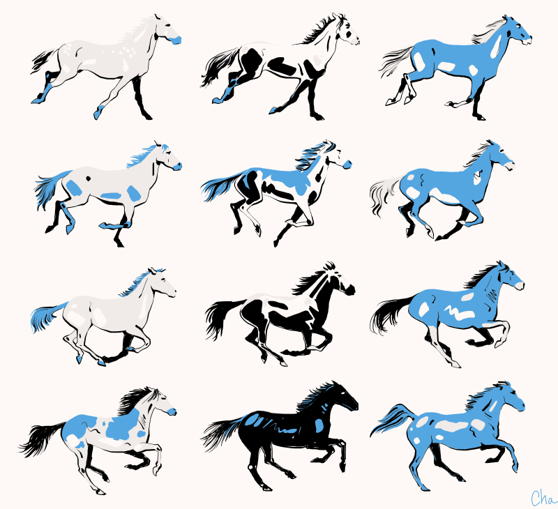 illustrations chevaux calendrier Easy Horse Care