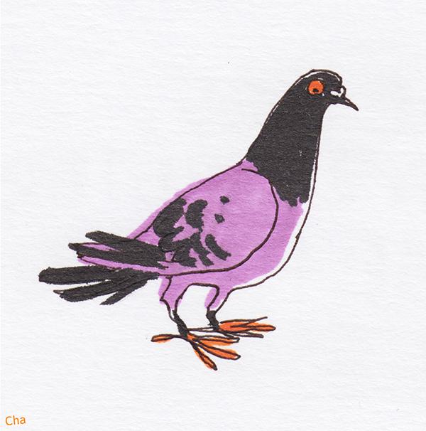 Pigeon illustration