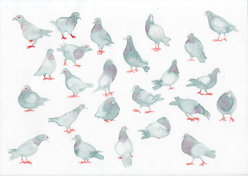 Aquarelle pigeons