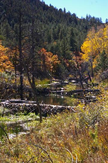 beaver ponds10-13